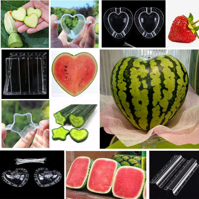 Star Cucumber Mold Tool For Fruit Vegetable Growing Star Shaped